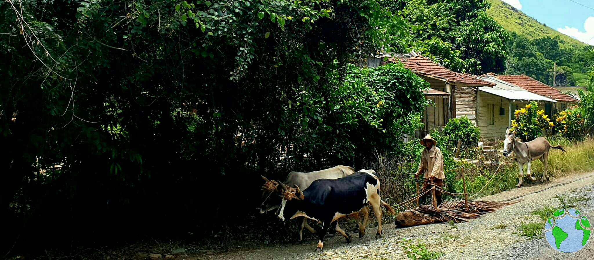 transporte sostenible klm