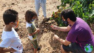 Ver las uvas en el campo con niños