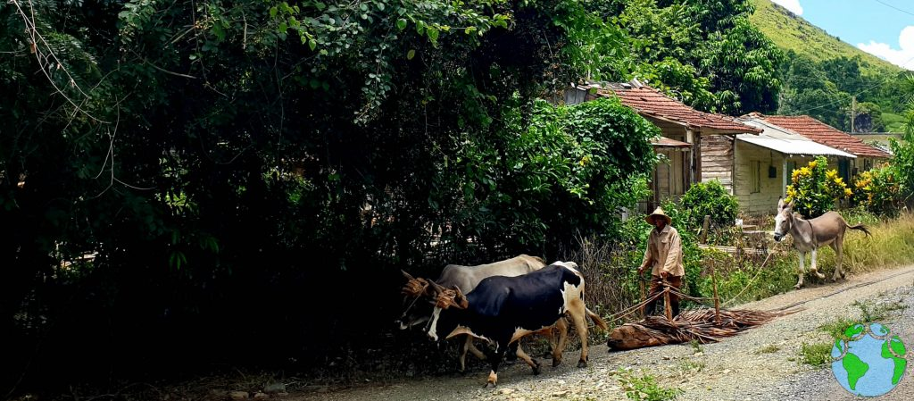 Hombre rural en Cuba